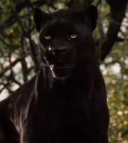 Bagheera - The Jungle Book Quotes