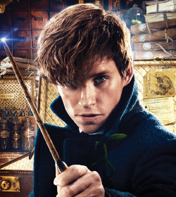 Newt Scamander - Fantastic Beasts and Where to Find Them Quotes, Fantastic Beasts: The Crimes of Grindelwald Quotes