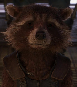 Rocket - Guardians of the Galaxy Quotes
