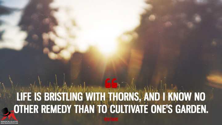 Life is bristling with thorns, and I know no other remedy than to cultivate one's garden. - Voltaire (Life Quotes)