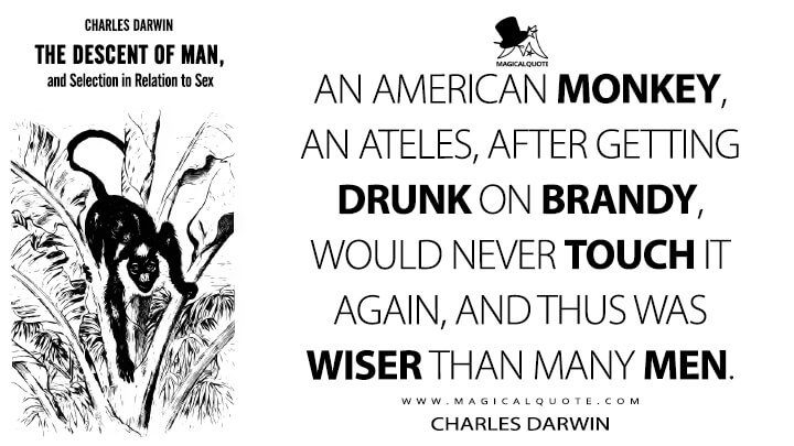 An American monkey, an Ateles, after getting drunk on brandy, would never touch it again, and thus was wiser than many men. - Charles Darwin (The Descent of Man, and Selection in Relation to Sex Quotes)